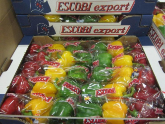 Import-Export Zoutewelle BV